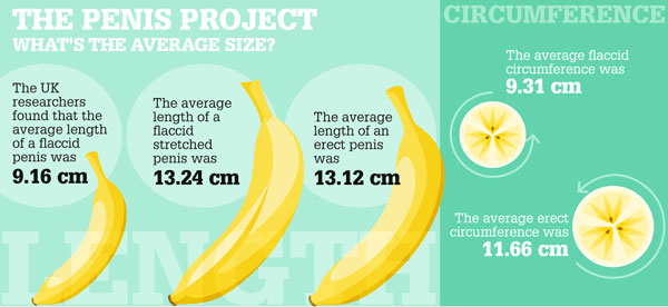 average penis length australia